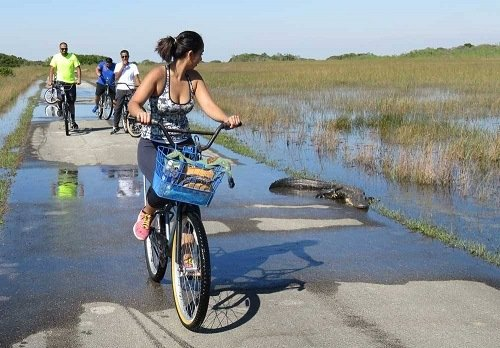 Shark Valley bike trail.
