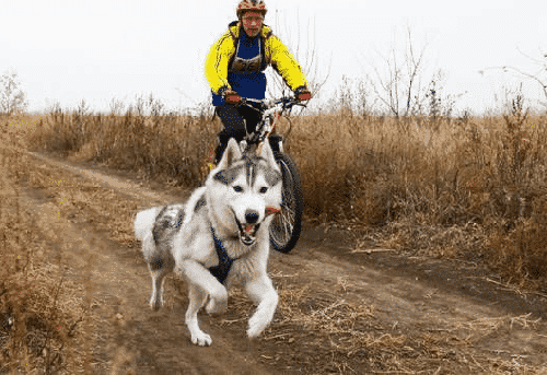 Ride With a Dog