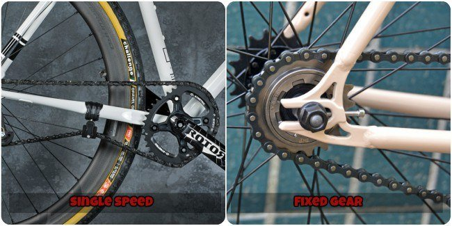 Single Speed vs Fixed Gear Bike