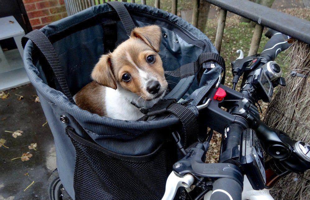 How To Bike Ride With Your Dog