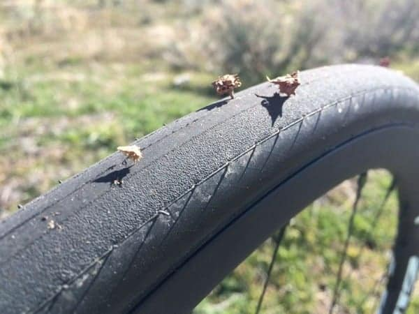 How To Deal With Goatheads When Riding